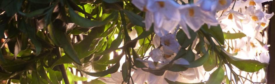 weiße blüten neben gartenleuchte